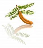 image of tamarind  - Tamarind with leaf on a white background - JPG