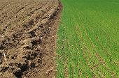 image of plowed field  - Photo of plowed land and cereal field - JPG