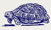 picture of tortoise  - Ear tortoise - JPG