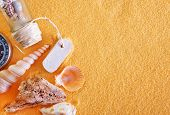 stock photo of echinoderms  - sea shells and stones on the yellow sand - JPG
