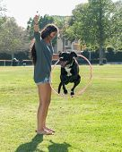 picture of hula hoop  - Labrador mix dog jumping through hula hoop - JPG