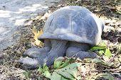 pic of tortoise  - Aldabra giant tortoise resting in island Curieuse - JPG