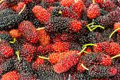 stock photo of mulberry  - all sweet fresh organic mulberry fruit background - JPG