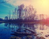 picture of swamps  - woods and trees in the swamp spring season - JPG