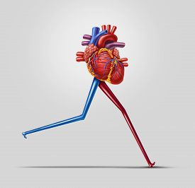 picture of cardiovascular  - Heart fitness concept as a human cardiovascular organ with running or jogging legs made from arteries as an exercise and health care icon of living a fit lifestyle - JPG