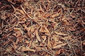 picture of dry grass  - Forest cover with fallen brown leaf on dried grass - JPG