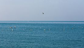 picture of flock seagulls  - A flock of seagulls  on the Bosphorus - JPG