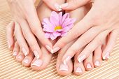 stock photo of french manicure  - care for beautiful woman legs - JPG