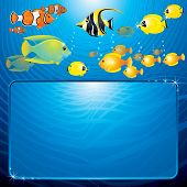 picture of sea life  - Sea Life scene with variety tropical Fishes and space for your text or design - JPG