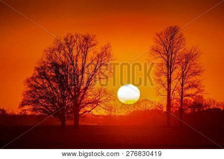 Silhouette Of Trees In Sunset