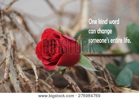 Kindness Inspirational Motivational Quoteone Kind