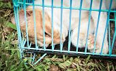 Sick Animal Cat Sick In The Cage Going To Animal Hospital Sad Animal poster