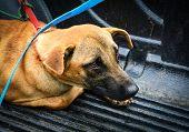 Sick Animal Dog Sick With Dog Collar Lying On Floor Going To Animal Hospital Sad Animal poster