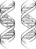 image of pyrimidines  - Doodle style genetic DNA triple helix illustration in vector format - JPG