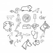 Domesticated Animals Icons Set. Outline Set Of 25 Domesticated Animals Icons For Web Isolated On Whi poster