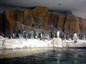 penguin display