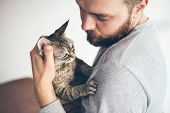 Close-up Of A Tabby Devon Rex Cat And Beard Man. Attractive Guy Is Holding In His Arms Cute Purring  poster