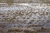 Wet Mud Soil For Rice Cultivation, Wet Ground Plots Agriculture Preparing For Farming Rice Cultivati poster