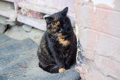 Homeless Cat On A City Street. Animals poster