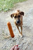 Dog And Sausage, Sausage In Hand And Dogs Brown Are Hungry, Hungry Dog (selective Focus) poster