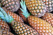 Group Of Fresh Pineapples Tropical Fruit At The Gourmet Or Market.organic Ananas Are Ripe With Palm  poster