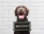 Happy Dog With Chalkboard With Welcome Text Says Hello Welcome We're Open Against White Brick Outdoo poster