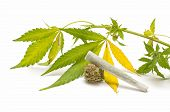 image of marijuana cigarette  - marijuana cigarette and green Leaf Isolated on white background - JPG