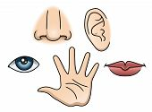 stock photo of hearing  - An Illustration depicting the five senses - JPG