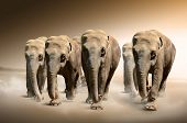 stock photo of indian elephant  - Photo of a herd of elephants on the move - JPG