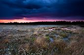image of swamps  - purple stormy sunset over swamp with cotton grass - JPG