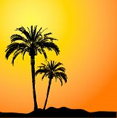 stock photo of beach sunset  - palm trees against a sunset sky - JPG