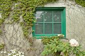 stock photo of creeper  - Italian Tuscany vintage vineyard window with green creepers - JPG
