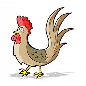 foto of cockerels  - cartoon cockerel - JPG