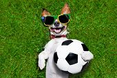 image of laugh out loud  - brazil soccer dog holding a ball and laughing out loud on football field - JPG