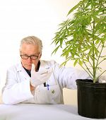 stock photo of ganja  - Doctor Sativa - JPG