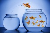 stock photo of fishbowl  - Gold Fish jumping from one fish bowl to another - JPG