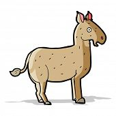 foto of mule  - cartoon mule - JPG