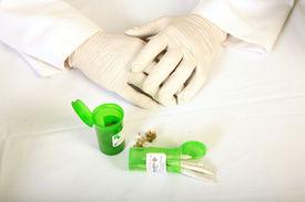 image of loco  - Medical Marijuana Buds - JPG