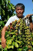 pic of rich soil  - Asian farmer happy with productivity crop Vietnamese man stand at coffee bean plantation cafe is the plant that rich caffeine popular agriculture product at basalt soil highland in Vietnam - JPG