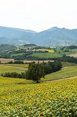 picture of pergola  - Country landscape between Cagli and Pergola  - JPG