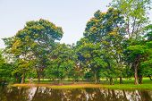 pic of swamps  - Beautiful green park tree and swamp Serenity scence - JPG
