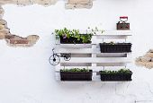 stock photo of pallet  - White storage industrial pallet used in gardening for a wall decoration as a shelf for flowerpots and other objects - JPG