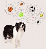 foto of border collie  - Cute black and white border collie thinking about balls in a thought bubbles above her head - JPG