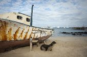 foto of sea lion  - Galapagos sea lion in front of an abandoned and weathered boat on the beach in Puerto Baquerizo Moreno on San Cirstobal Island. ** Note: Soft Focus at 100%, best at smaller sizes - JPG