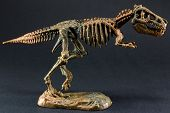 picture of dinosaur  - dinosaur Tyrannosaurus T Rex statuette skeleton on black background t - JPG