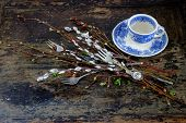 pic of willow  - Willow branches with catkins on an old vintage wood from above - JPG