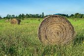 picture of haystack  - Haystacks in the field among wildflowers on sunny clear day - JPG