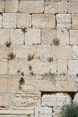 picture of tora  - The Wailing Wall  - JPG