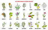 Best Herbal Remedies For Fungal Infections. Hand Drawn Vector Set Of Medicinal Plants poster