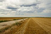Countryside Agricultural Landscape. Country Road Through Fields. Countryside Landscape. Countryside. poster